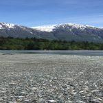 Stream and Wetland Temperature Monitoring Training