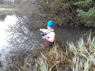 Water Quality Monitoring Tracks Effectiveness of Restoration on Juneau's Duck Creek