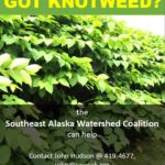 WANTED: Bohemian knotweed (Dead)