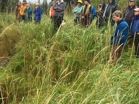 SAWC Initiates Projects to Manage High Priority Invasive Plants