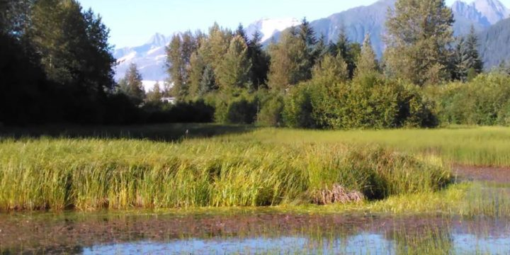 Nancy St. Wetlands Effectiveness Monitoring Final Report