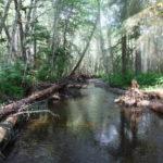 Pat's Creek Restoration in the News!