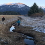 Restoration Potential in the Mendenhall Wetlands